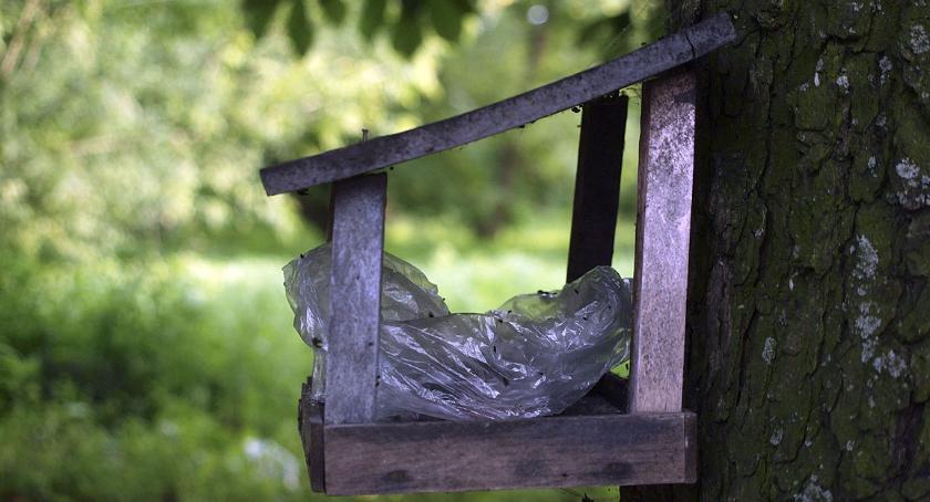 place i podwórka, dokarmia muchy Barszczewskiej - zdjęcie, fotografia