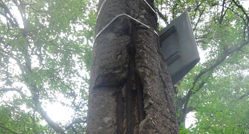 bezpieczeństwo, tylko drzewa umierają stojąc - zdjęcie, fotografia