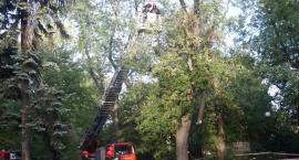 Interwencja strażaków w Parku Żeromskiego